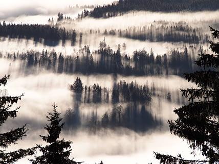Die Nebelgrenze liegt genau auf der Höhe der Ibergeregg. Das einfallende Licht erzeugt eine magische Wirkung.